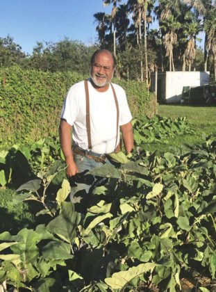 Photo: David Fuertes stands within an inter-cropping of kalo and eggplant